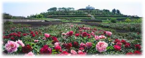中国牡丹園