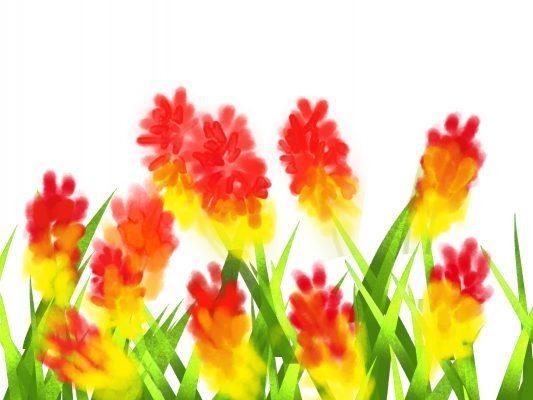 トリトマの花言葉,英語名は?別名に赤熊百合(ゆり)?   春夏秋冬