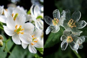 透明花の画像