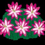 シャコバサボテンの花言葉,英語名は?その由来も紹介!