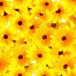 正義の花!?ルドベキアの花言葉、英語名とは?