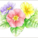 プリムラの種類別花言葉まとめ!英語名や名前由来も!