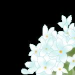 ブバルディアの花言葉、英語名は?その由来も紹介!