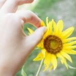 「花占い」に使う花ランキングTop7!花で占う内容が変わる!?