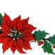 クリスマスの象徴!ポインセチアの花言葉,英語名,由来は?