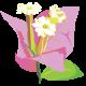 カンナの花言葉,由来は?最高の位「仏陀」が生んだ花